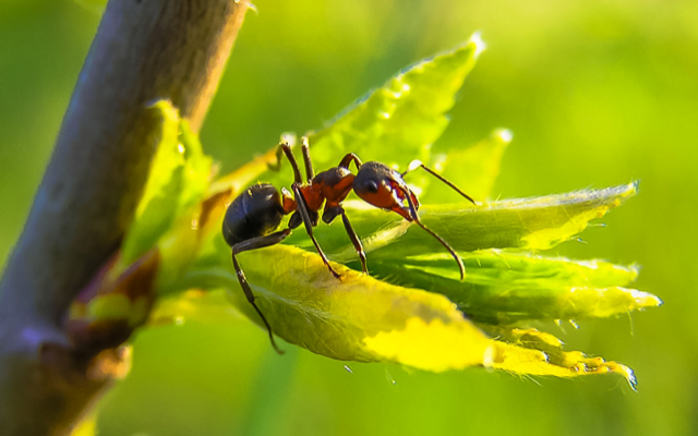 The Ant Nest Principle: What Ants Can Teach Us about Business.